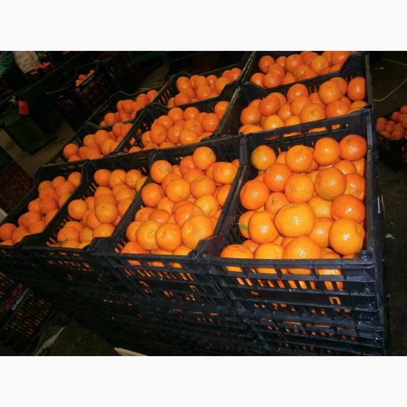 Продам мандарины из Испании оптом, Киев