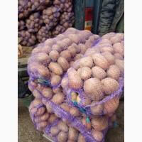 Продам картофель оптом по всей Украине, все сорта, лучшее качество