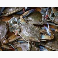 Mud Crab King Crab