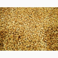 Закупаем Пшеницу с НДС