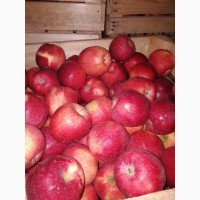 Яблука сортові на сік