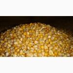 Pакупаем кукурузу любого качества ( влажную)Дорого
