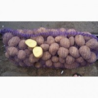Продам картошку сорт Бела роса и Славянка