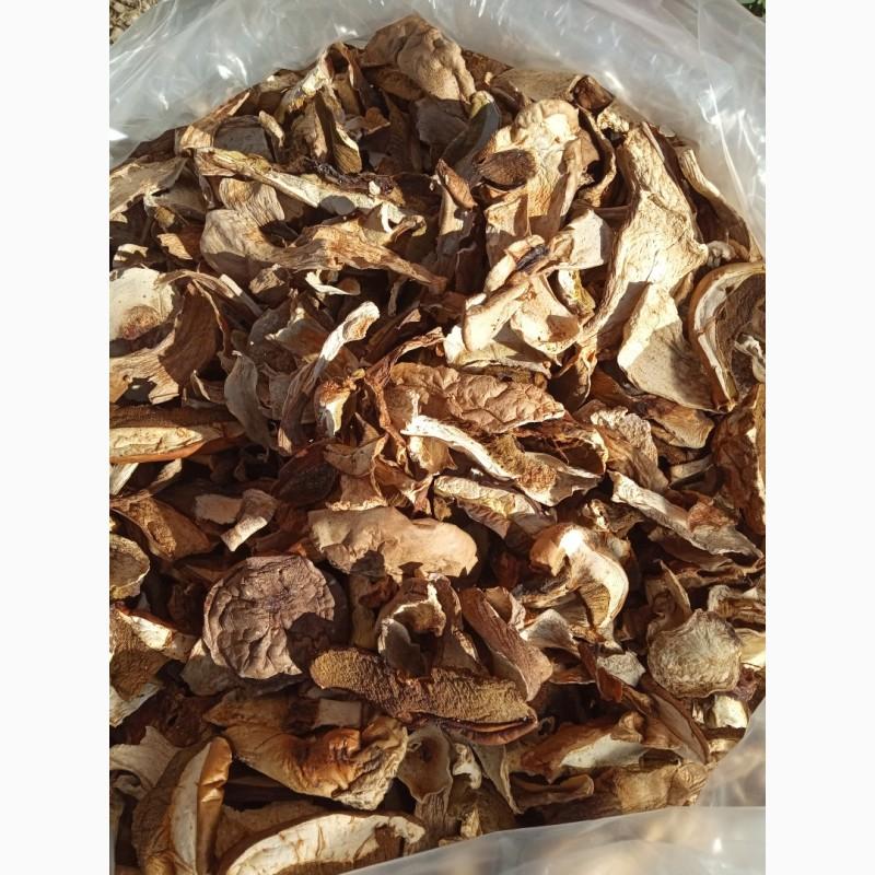 белые грибы 2021 тюменская область купить