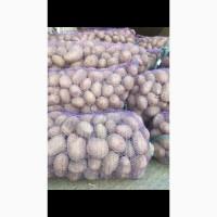 Продам картошку 21 тонн отличного качества