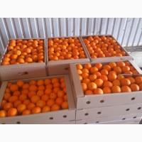 Акция Апельсины Турция Испания