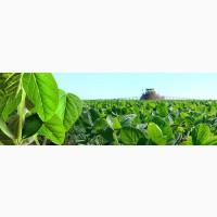 Фірма закуповуе сою 2020 года урожай