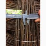 Подвой для прививки груши Айва (1 сорт) диаметр 6-10мм - цена - 4, 50грн