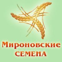 Семена гречихи сорт Украинка - элита / 1 репродукция