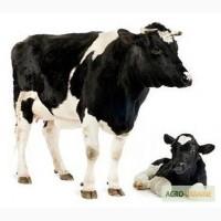 Комбікорм для корів ВРХ / Комбикорм для коров КРС