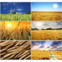Покупаем семена подсолнечника, сои, зерновые
