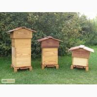 Курсы пчеловода-любителя