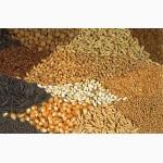 Купим зерновые культуры (Украина)