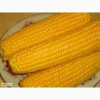 Куплю кукурузу.Самовывоз