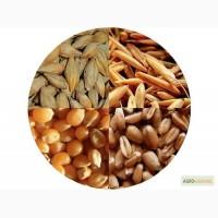 Куплю оптом ячмень и пшеницу