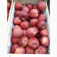 Куплю Яблоко 6+ от 18 тонн