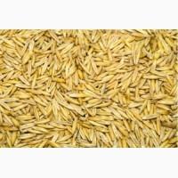 Купуємо зерно гречки, вівса, проса, ячменю, пшениця фуражна, кукуруза