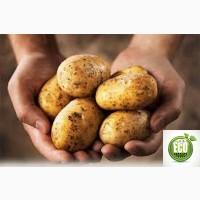 Продам экологически чистый картофель