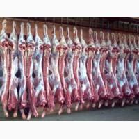 Продам говядину в полутушах