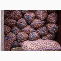 Продам посадку ривьера картофель