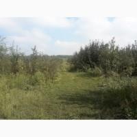 Продажа агрофирмы Николаевская область