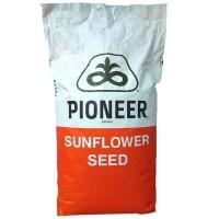 PIONEER P63LE113 (Піонер) - насіння соняшнику