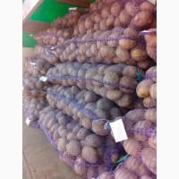 Картофель беларусский Ред скарлет продам! от 10 тонн