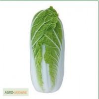 Семена пекинской капусты KS 374 F1 фирмы Китано