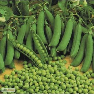 Семена гороха Царевич эл., пригодный к сбору прямым комбайнированием