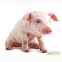 Комбікорм для свиней / Комбикорм для свиней