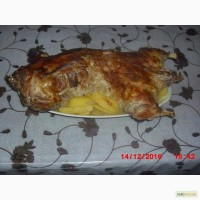 Домашнее мясо нутрии