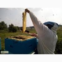 Сушь (пчелиные соты) стандарта Дадан - 300мм. трех сортов, 30/40/50 грн. соответственно