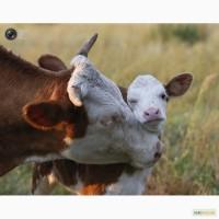 Корма, люцерна, луговое сено от ТМ «МаксимуМ» - для КРС, овец, лошадей, кроликов и птицы
