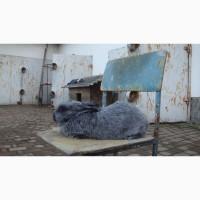 Продам кролів породи європейське срібло
