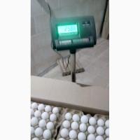 Продам яичный порошок, произведенный из яиц собственной птицефабрики