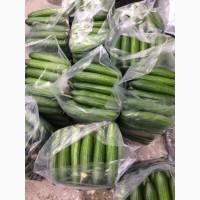 Продам огірок свіжий сорту Яні