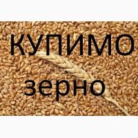 Пшениця в великих обсягах купуємо