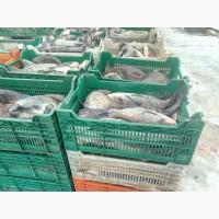 ФХ продает живую товарную рыбу