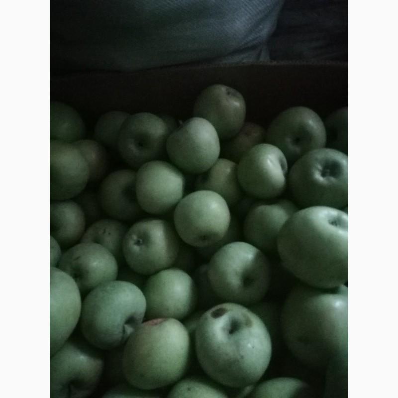 Продам яблука гарної якості +7_10, Тернопольская обл.