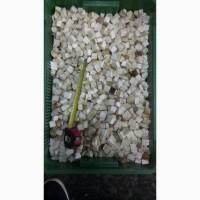 Продам заморожені гриби білі