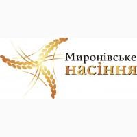 Яровая пшеница Струна Мироновская, элита