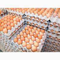 Продам яйца высшего качества