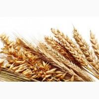 Покупаем зерновые! Самовывоз, все регионы