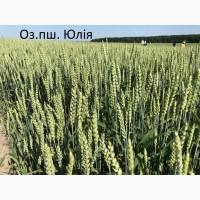 Семена озимой ранней пшеницы Юлия 1-реп. (Чехия)