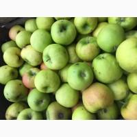 Продаю Яблука зимових сортів