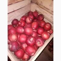 Продам яблука айдоред, гренні сміт