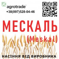 Семена озимой пшеницы Мескаль / Meskal от производителя в Харьковской области, Агротрейд