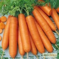 Продам семена моркови Берликум