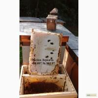 Продам 500 бджолопакетів карпатки доставка від 2шт
