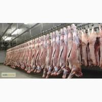 Импорт свинины, курятины, говядины, индюшачье.Мясо Субпродукты, фарш. Охлажденная свинина
